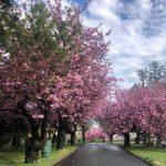 Hillside Cemetery -